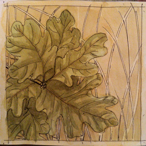 Garry oak in dry grass. Ink and watercolour.