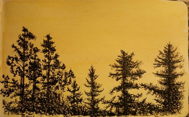 The orange light coming from behind the trees in our backyard. Watercolour and india ink done with a dip pen.