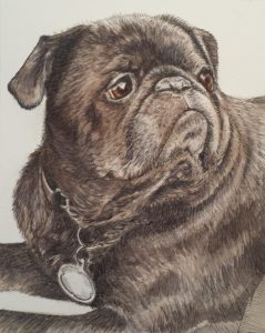 Ink and watercolour dog portrait of Jamal the pug.